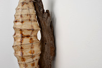 Cocoon, detail